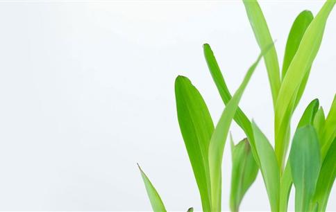 化肥负面作用被严重夸大,有机农业不是大众农业,科学高效利用是出路
